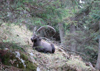 057 Bärenschutzklamm-Hochlantsch, 8.10.2017-11.27