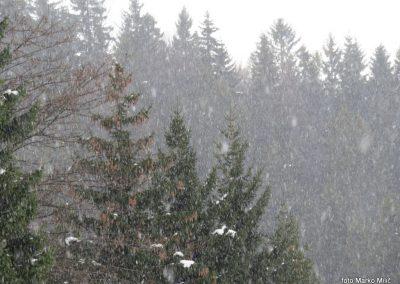 48 snežna pluha na Pesniku, 1101m, 14.59