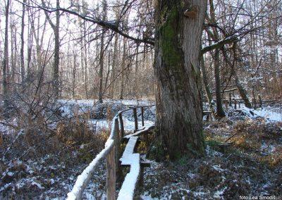 028 IZLET V NEZNANO 2017 - Mura in obmurski log