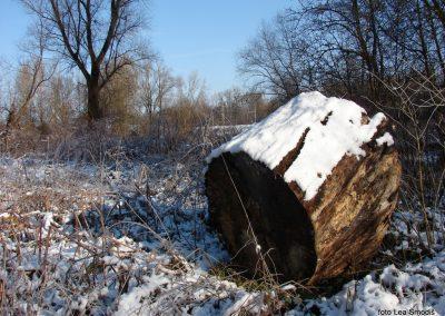 049 IZLET V NEZNANO 2017 - Mura in obmurski log