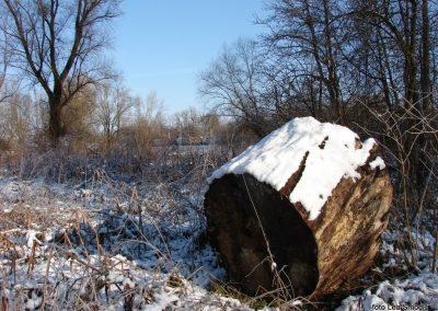 050 IZLET V NEZNANO 2017 - Mura in obmurski log