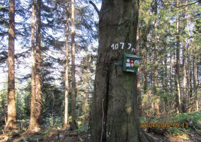 045 Tolsti vrh, 1077m, 10.13