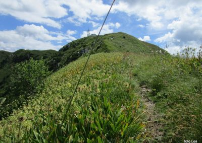 040 polje čemaža na severni strani grebena, 11.36