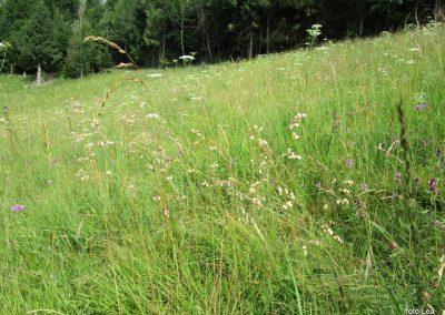 101 na travniku