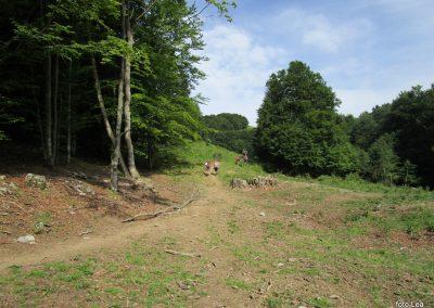 107 po uri gozdne poti na pašnikih, 9.53