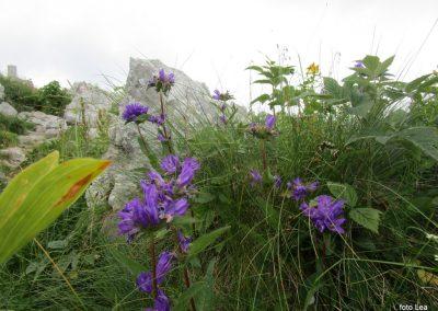 158 cvetje ob poti