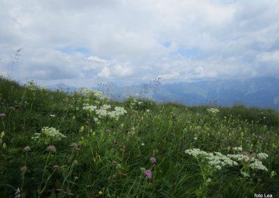 161 cvetoči travnik ob poti