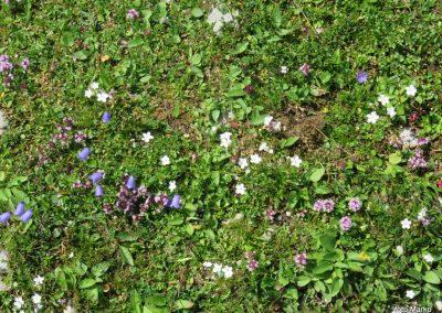 014 cvetlična pisana preproga