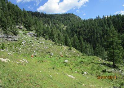 027 nekoliko bolj strmo proti planini Zgornja Krma, 11.39