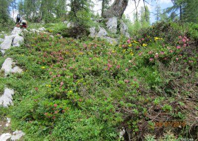 052 botanični vrt na poti