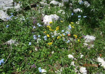 053 botanični vrt na poti