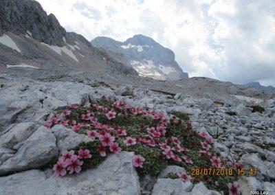 115 triglavska roža in Triglav