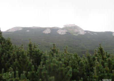 035 VZPON NA SNEŽNIK, na poti od Sviščakov proti SVelikemu Snežniku - med ruševjem in cvetjem - pogled na Mali Snežnik, 11.16