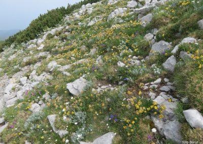 046 VZPON NA SNEŽNIK, botanični vrt na vrhu , 11.40