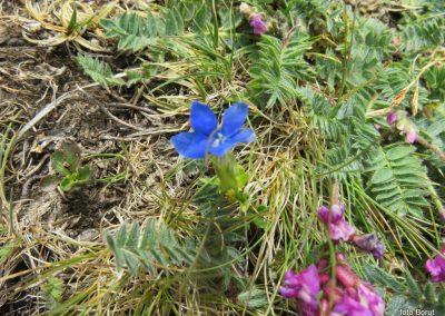 048 VZPON NA SNEŽNIK, botanični vrt na vrhu , 11.40